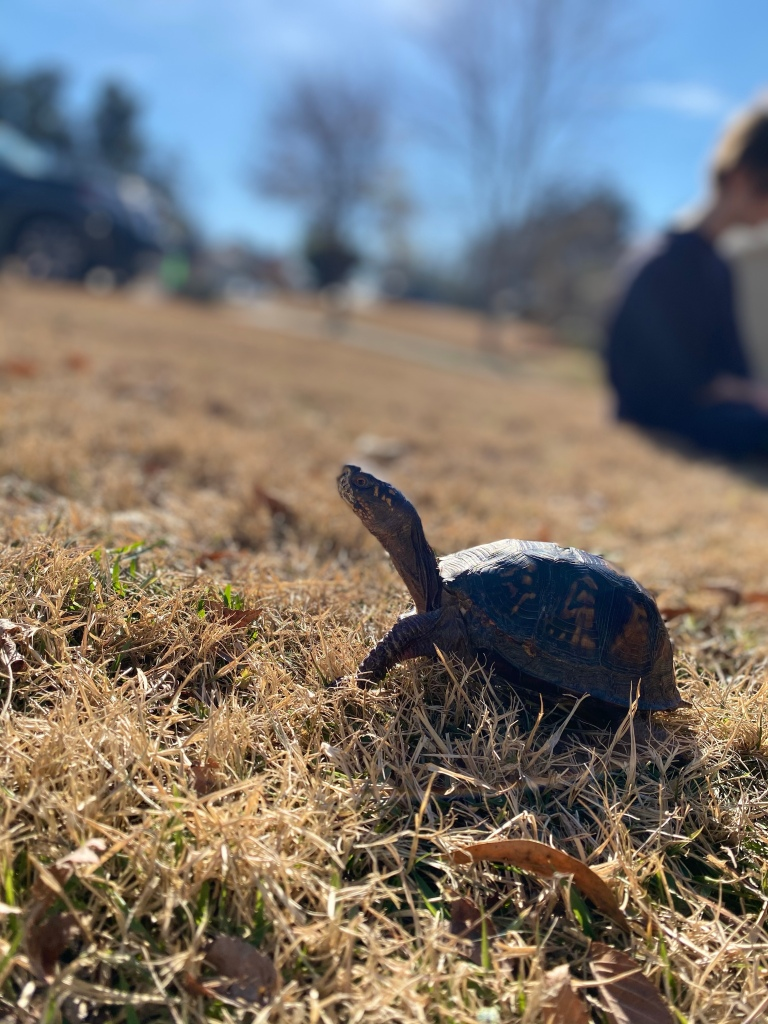 My turtle enjoying the fresh air and sunlight.